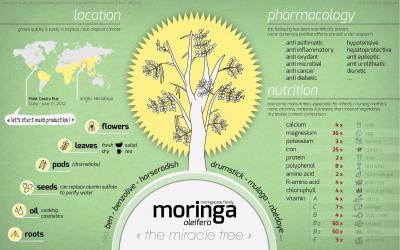 moringapost1